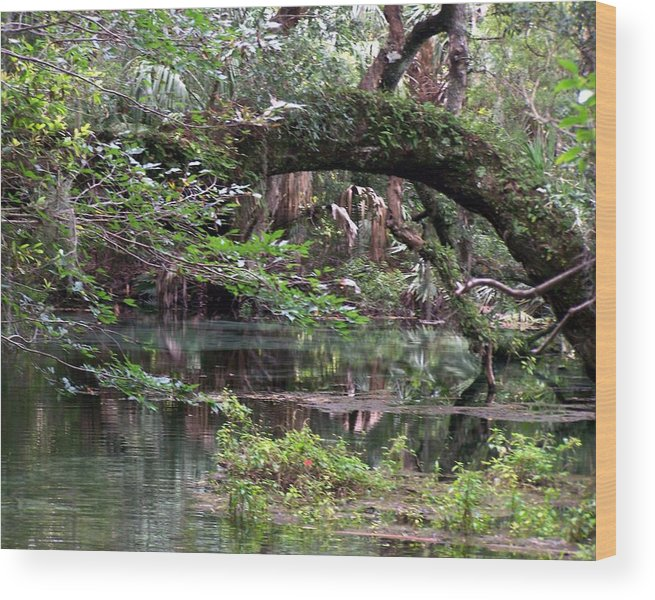 Landscape Wood Print featuring the photograph Enchanted Forrest IIi by Cheryl Matthew