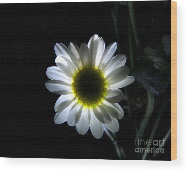 Artoffoxvox Wood Print featuring the photograph Illuminated Daisy Photograph by Kristen Fox