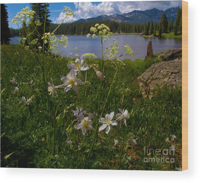 Alpine Wood Print featuring the photograph Lake Irwin Wildflowers by Crystal Garner