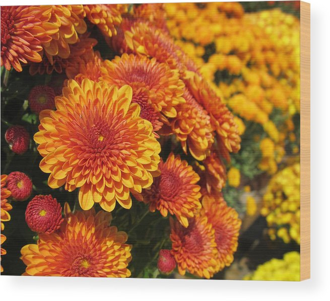 Flowers Wood Print featuring the photograph Orange Mum by Michele Caporaso