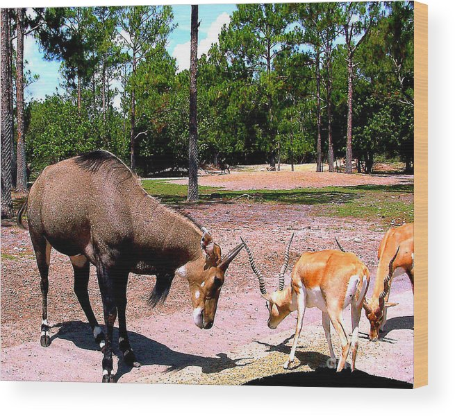 Animals Wood Print featuring the photograph Pick On Someone Your Own Size by Merton Allen