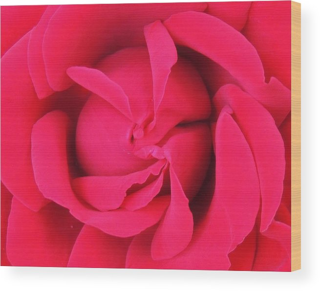 Landscape Wood Print featuring the photograph Rose Center 1 by Johnny Booey