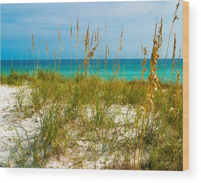 Sea Oats Wood Print featuring the photograph Sea Oats Gulf - Destin by Ernest Hamilton