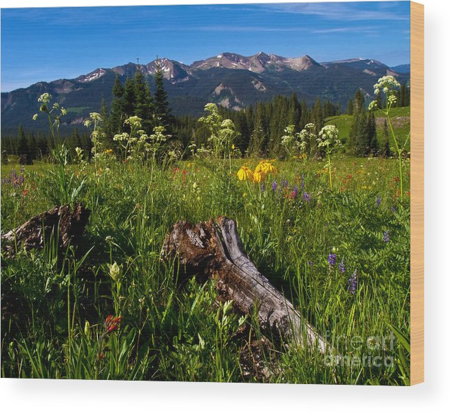Alpine Wood Print featuring the photograph Wildflower Meadows And The Anthracite Range by Crystal Garner