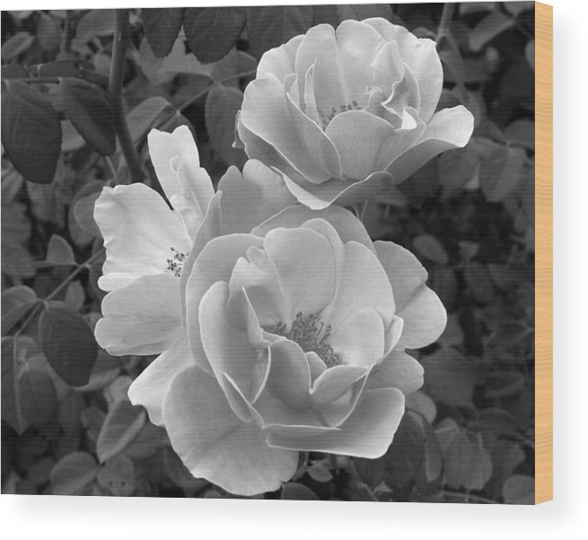 Rose Wood Print featuring the photograph Black And White Roses 2 by Amy Fose