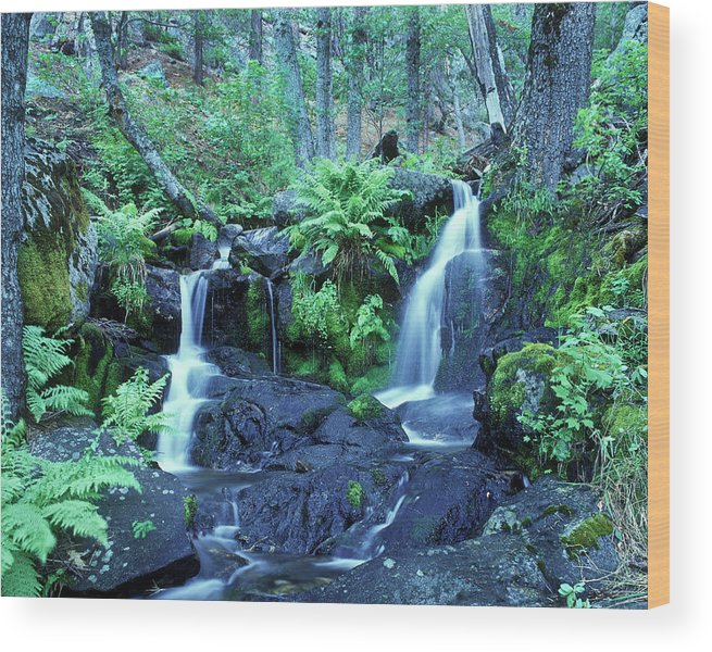 Landscape Wood Print featuring the photograph Cascade Creek And Ferns by Joe Palermo