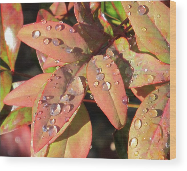 Raindrops Wood Print featuring the photograph Raindrops by Michele Caporaso