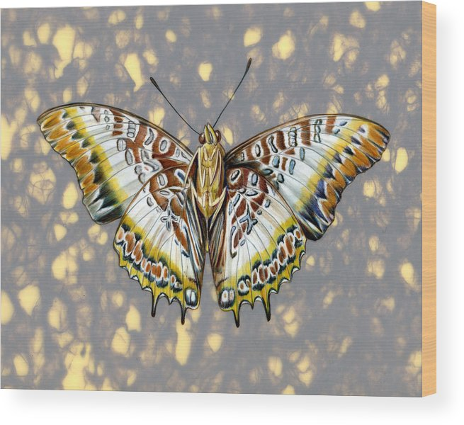 Butterflies Wood Print featuring the painting African Butterfly by Mindy Lighthipe