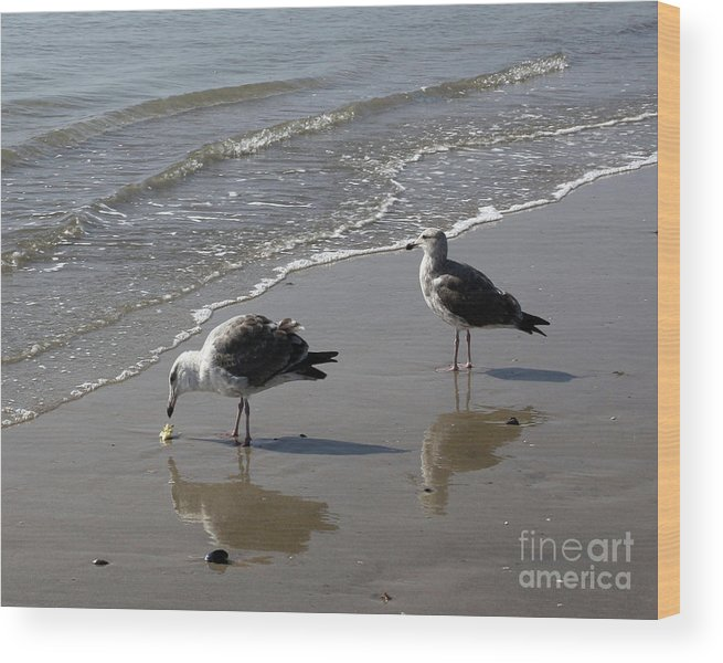 Beach Wood Print featuring the photograph Afternoon Snack by Kelly Holm