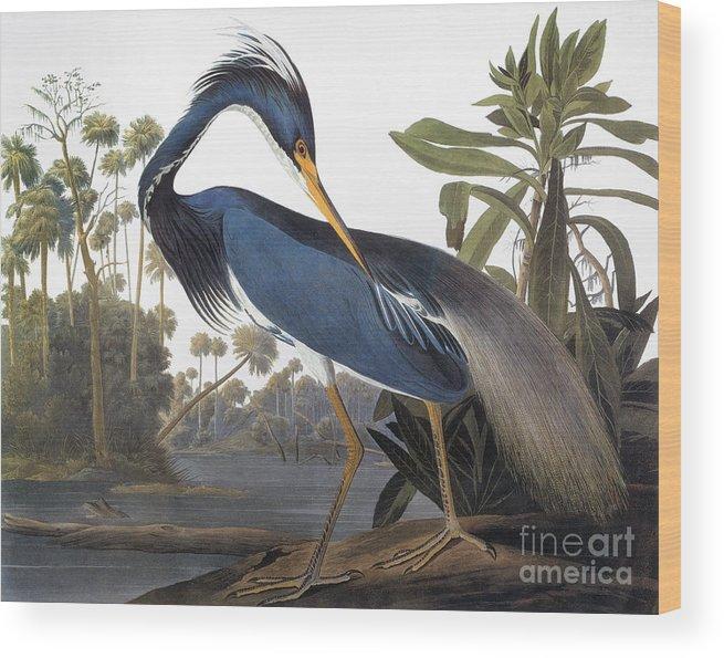 1827 Wood Print featuring the photograph Audubon Heron, 1827 by John James Audubon