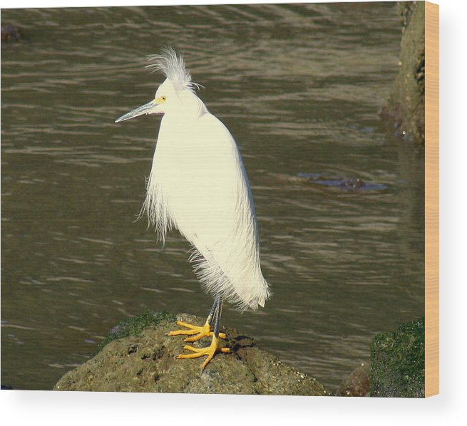Nature Wood Print featuring the photograph Bad Hair Day by Kerry Reed