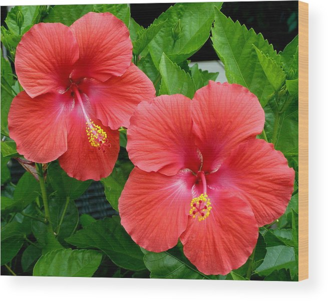 Flowers Wood Print featuring the photograph Beautiful Pair by Jeanette Oberholtzer