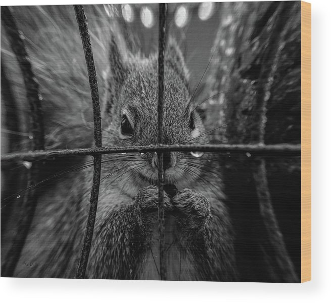 Squirrel Wood Print featuring the photograph Behind Bars by Bob Orsillo