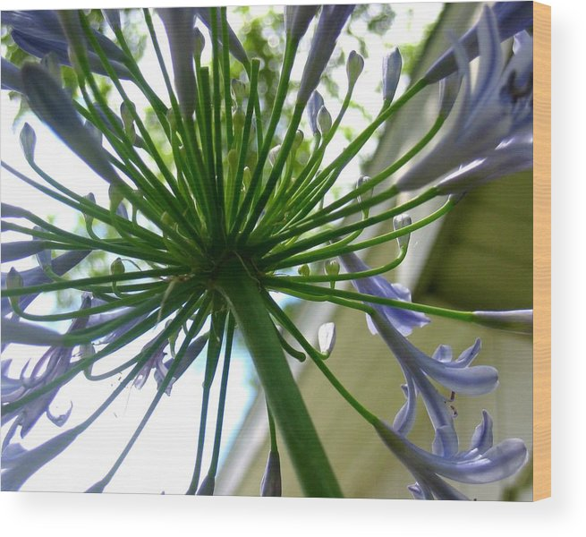 Photograph Wood Print featuring the photograph Blossom Explosion by Lindsey Orlando