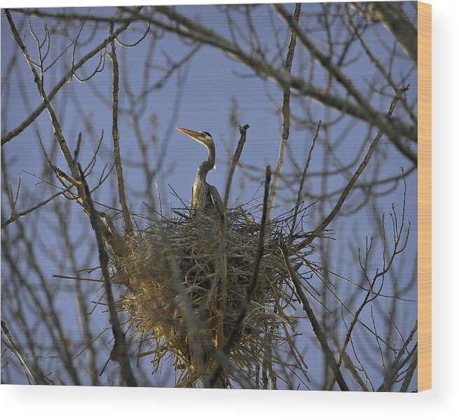 Beautiful Photos Wood Print featuring the photograph Blue Heron 30 by Roger Snyder