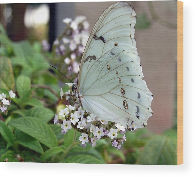 White Butterfly Wood Print featuring the photograph Bride by Blima Efraim