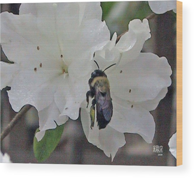 Flowers Wood Print featuring the photograph Busy Bee by Michele Caporaso