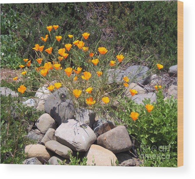 Artoffoxvox Wood Print featuring the photograph California Poppies Photograph by Kristen Fox
