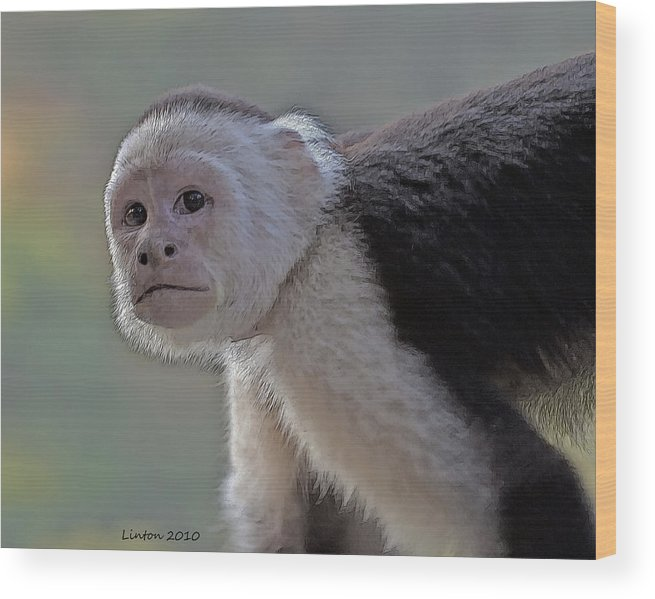 White-fronted Capuchin Monkey Wood Print featuring the digital art Capuchin Monkey by Larry Linton