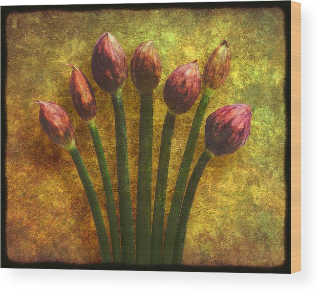Texture Wood Print featuring the digital art Chives Buds by Digital Crafts