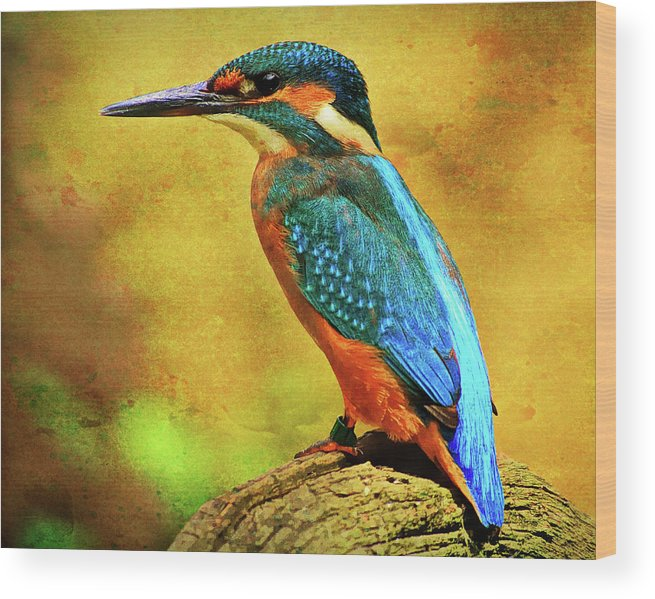 Alcedines Wood Print featuring the photograph Colorful Kingfisher by Roy Pedersen