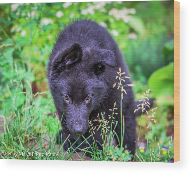 Dog Wood Print featuring the photograph Coming Through by Penny Miller