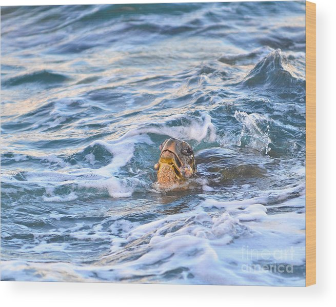 Animal Wood Print featuring the photograph Drowning by Marlene Frazier