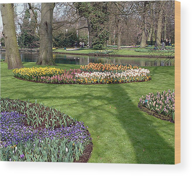 Keukenhof Gardens. Lisse Wood Print featuring the photograph Dutch Tulip Gardens by Charles Ridgway