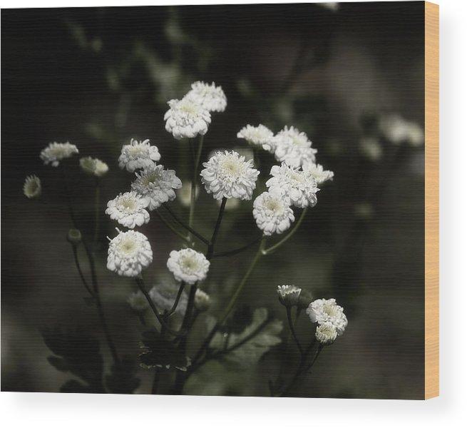 Tanacetum Parthenium Wood Print featuring the photograph Feverfew - Tanacetum Parthenium by Laura Vilandre
