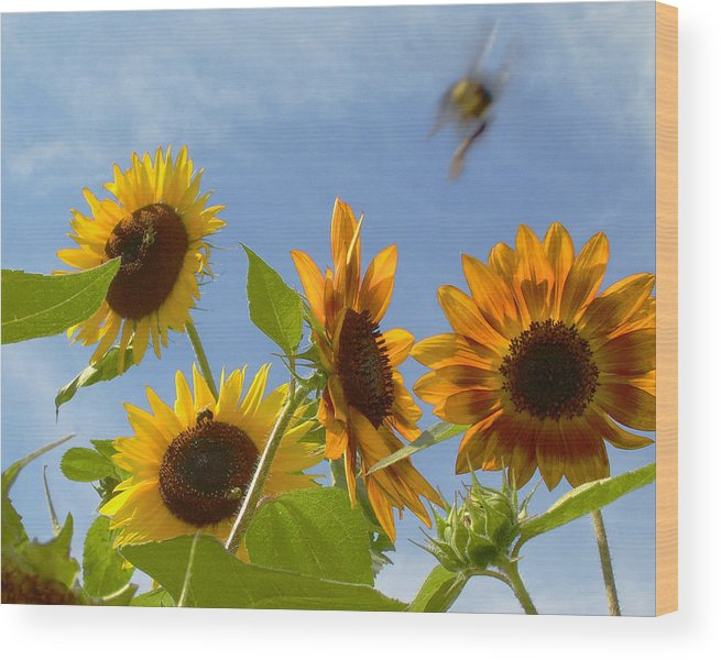 Bee Wood Print featuring the photograph Flight Of The Bubble Bee by Julie Geiss