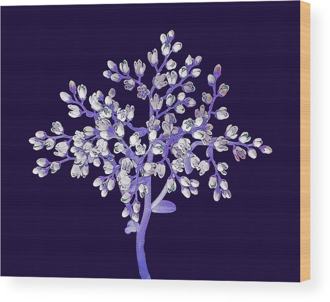 Flower Wood Print featuring the photograph Flower Tree by Digital Crafts