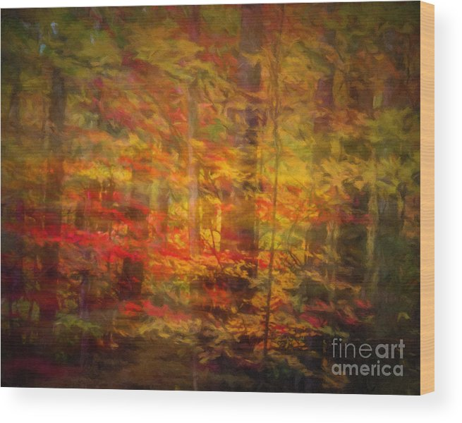 Forest Wood Print featuring the photograph Colorful Forest, Smoky Mountains, Tennessee by Stanton Tubb