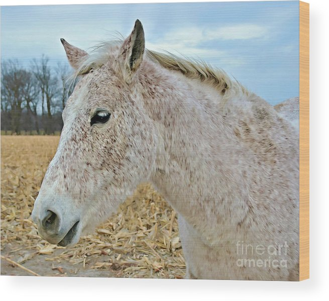 Freckles Wood Print featuring the photograph Freckles by Kathy M Krause