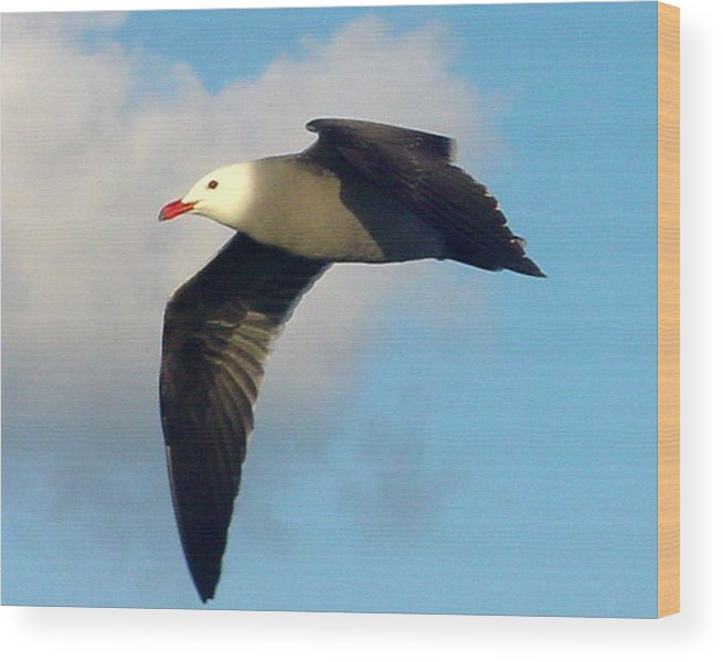 Seagull Wood Print featuring the photograph Free Flight by PJ Cloud