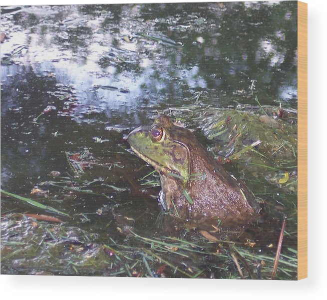 Nature Pond Frog Nature Wood Print featuring the photograph Froggie II by Anna Villarreal Garbis