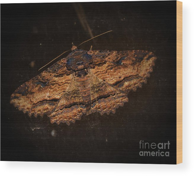 Adrian-deleon Wood Print featuring the photograph Front Side Of A Moth On A Window by Adrian DeLeon