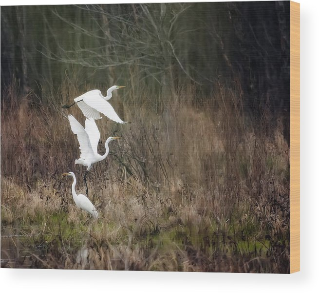 Bird Wood Print featuring the photograph Great Egrets by Al Mueller