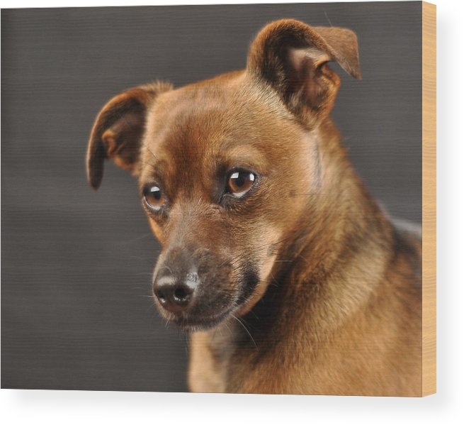 Pets Wood Print featuring the photograph Heidi by Peter Schumacher