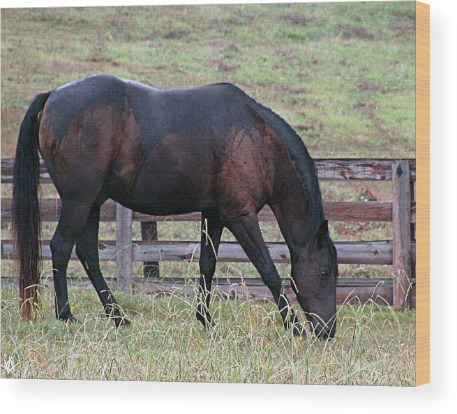 Horse In A Pasture Wood Print featuring the photograph Horse In A Pasture by Debra   Vatalaro
