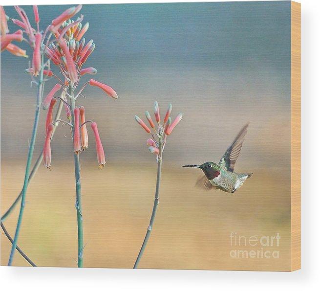 Hummingbird Wood Print featuring the photograph Hummingbird Beak On Horizon by Wayne Nielsen