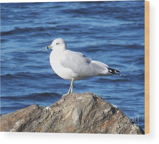 Seagull Wood Print featuring the photograph I Am A Rock Star - Photograph by Jackie Mueller-Jones
