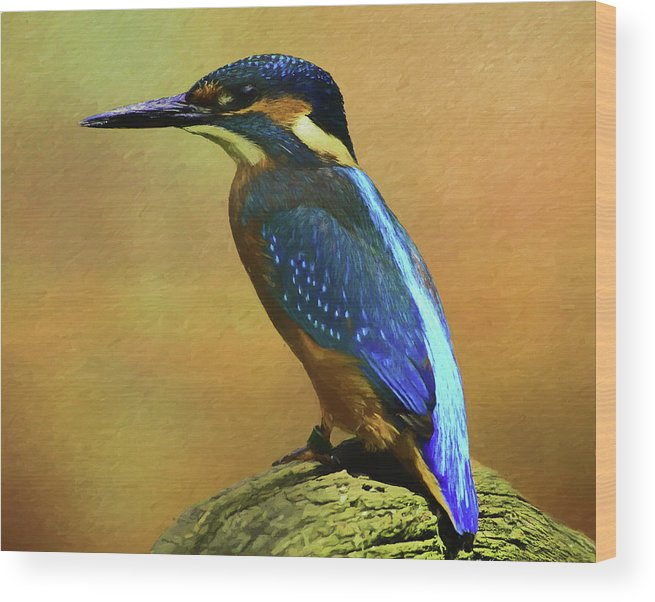 Alcedines Wood Print featuring the digital art Kingfisher Perch by Roy Pedersen