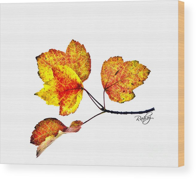 Autumn Wood Print featuring the photograph Maple Leaves by Rahat Iram