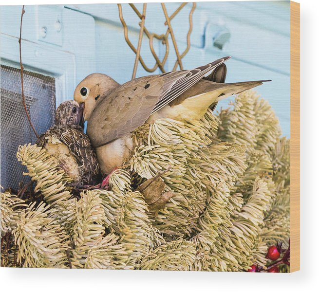 Dove Wood Print featuring the photograph Mourning Dove And Chick by Steven Ralser