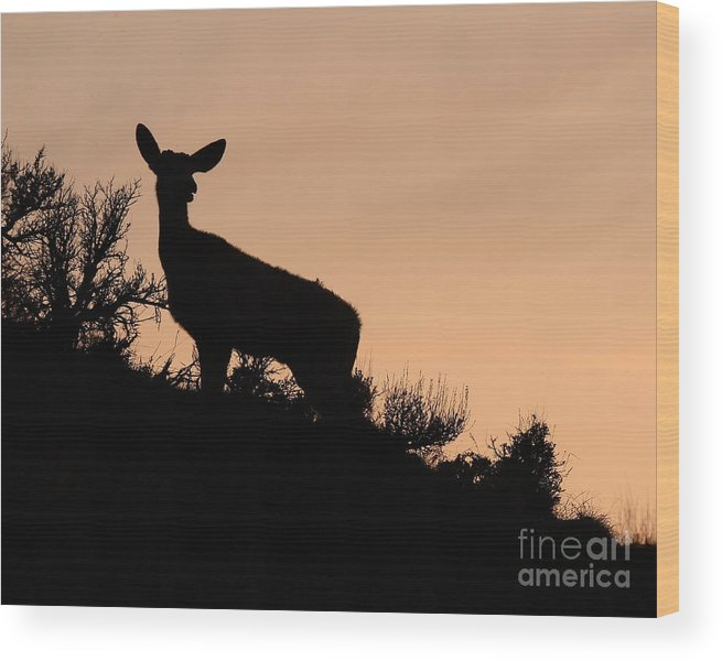 Deer Wood Print featuring the photograph Mule Deer Silhouetted Against Sunset Ridge by Max Allen