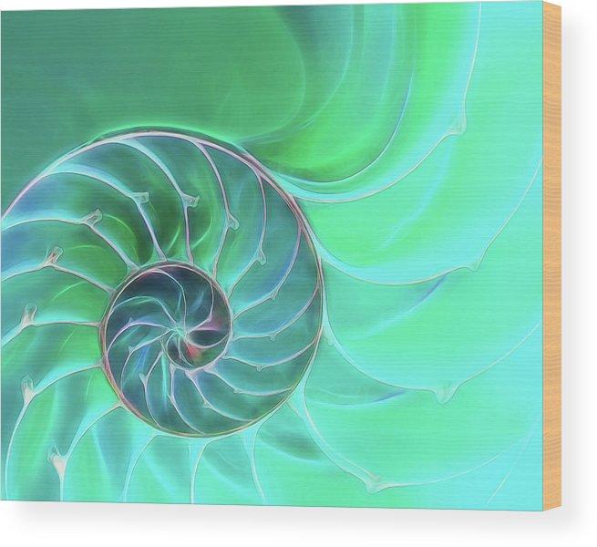 Nautilus Shell Wood Print featuring the photograph Nautilus Aqua Spiral by Gill Billington