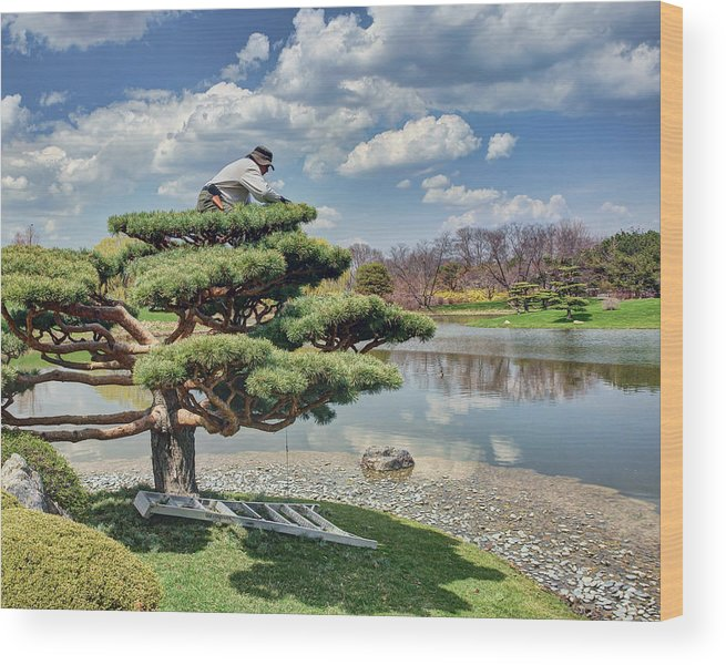 Tree Wood Print featuring the photograph Niwaki by Nikolyn McDonald