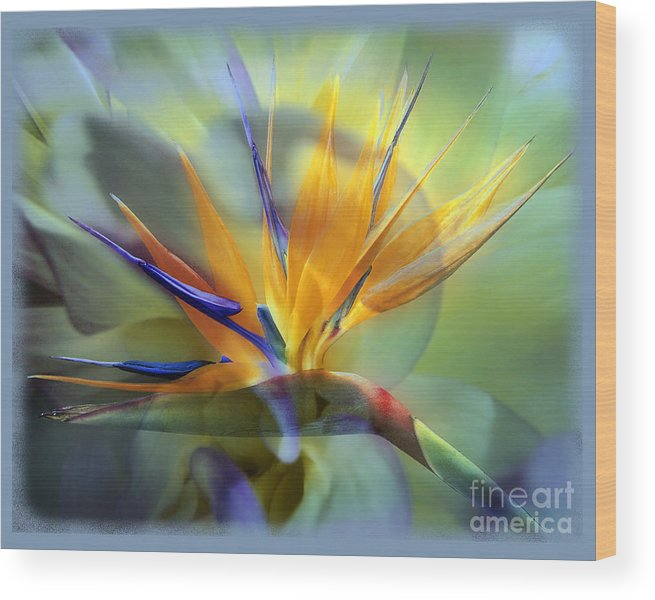 Flower Wood Print featuring the photograph Paradise Found by Chuck Brittenham