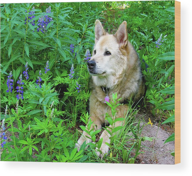 Alert Wood Print featuring the photograph Pretty Dog by Crystal Garner