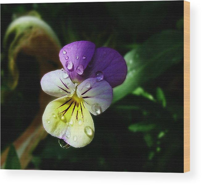 Flower Wood Print featuring the photograph Purple Pansy by Anthony Jones